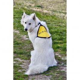 """Žlutá signální vesta """"Pes ve výcviku"""""""
