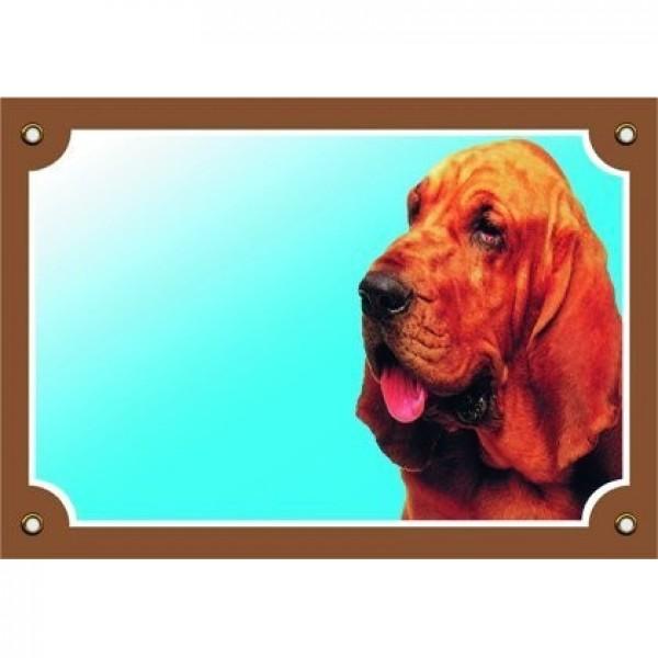 Barevná cedulka Pozor pes